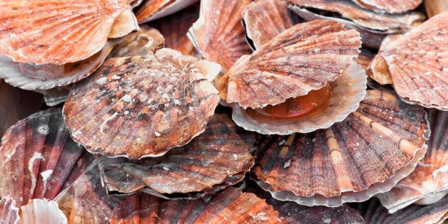 Scallops Have 200 Eyes That Function Like A