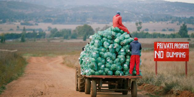 Farm workers harvest cabbages at a farm in Eikenhof, near
