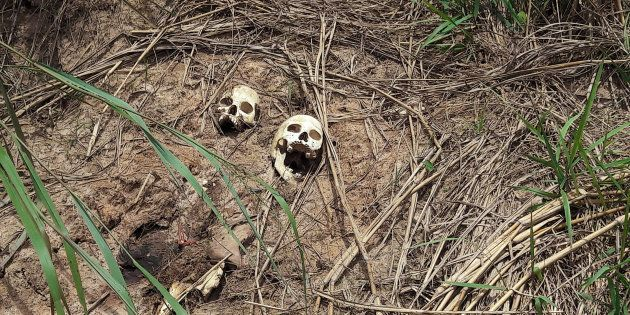 Human skulls suspected to belong to victims of a recent combat between government army and Kamuina Nsapu...