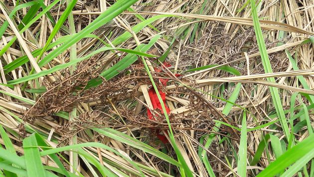 A red headband, worn by Kamuina Nsapu militia fighters, is seen at a mass grave discovered by villagers...
