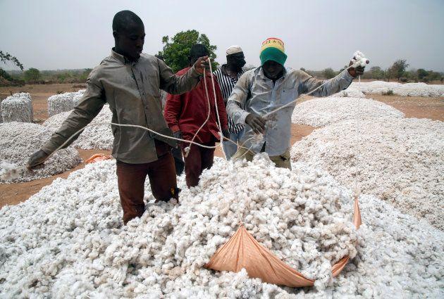 Farmers work at a cotton market in Soungalodaga village near Bobo-Dioulasso, Burkina Faso March 8, 2017....