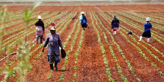 The One Million Jobs That Never Were -- South Africa's Employment Dilemma In