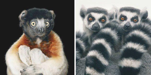 Slideshow: Photographers Spends 2 Years Taking Photos Of Animals Near