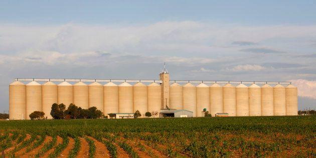 Grain silo's stand behind fields near
