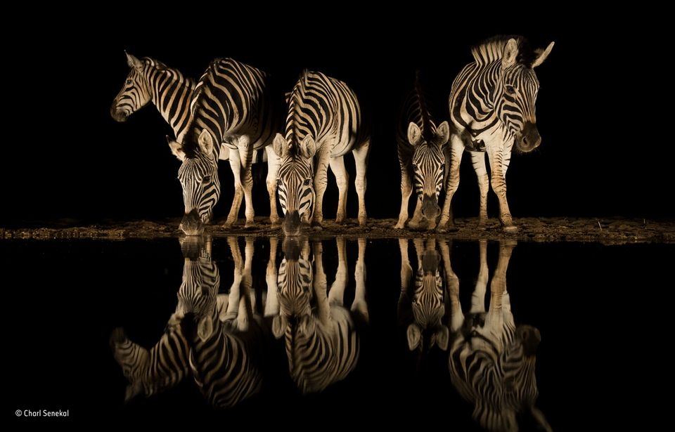 Three South African Finalists' Images From The World Wildlife Photographer Of The Year