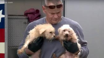 More than 600 dogs were rescued from a puppy mill in Valdosta, Georgia.