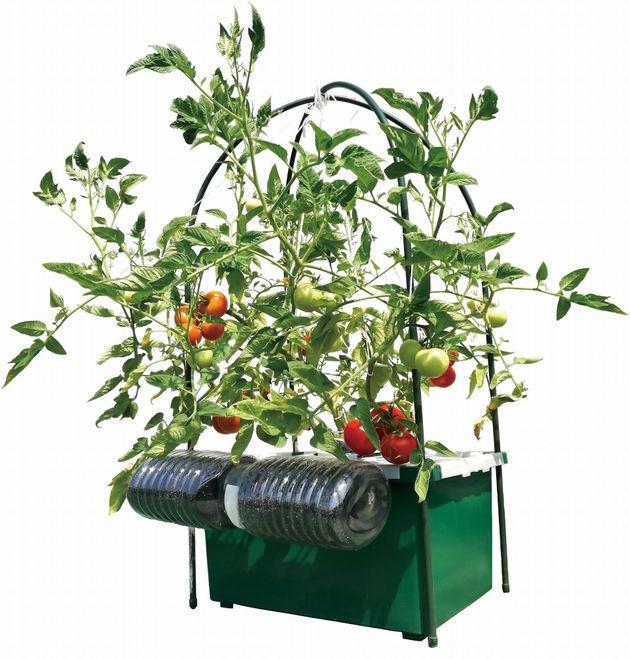SoBiCで育成した野菜の様子
