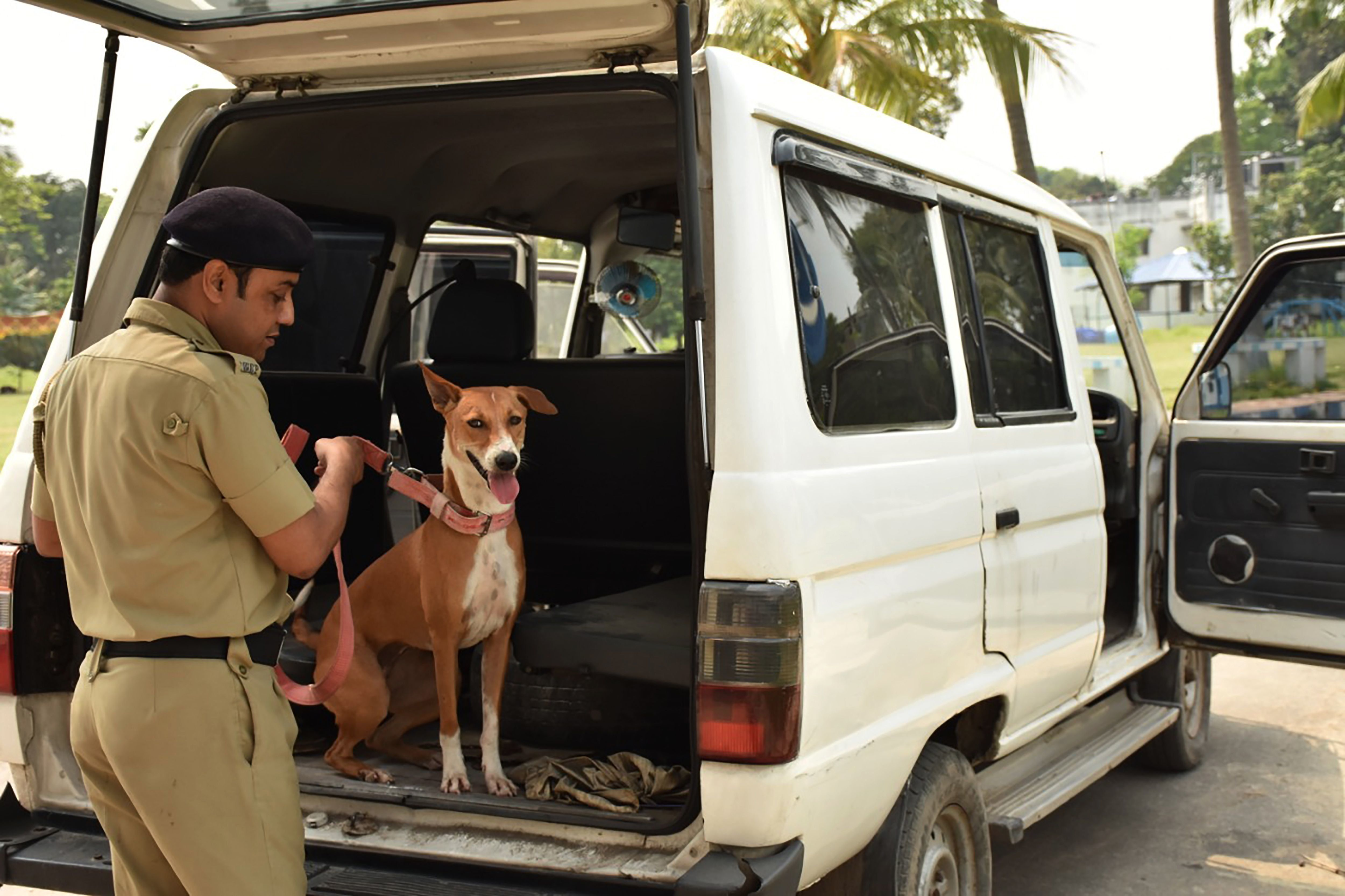 This Kolkata Stray Dog Trained Her Way Into Bengal Police's Elite Bomb-Sniffing