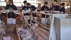 Ακτιβιστές για τα δικαιώματα των ζώων και βέγκαν σκότωσαν γουρουνάκια (από υπερβάλλοντα