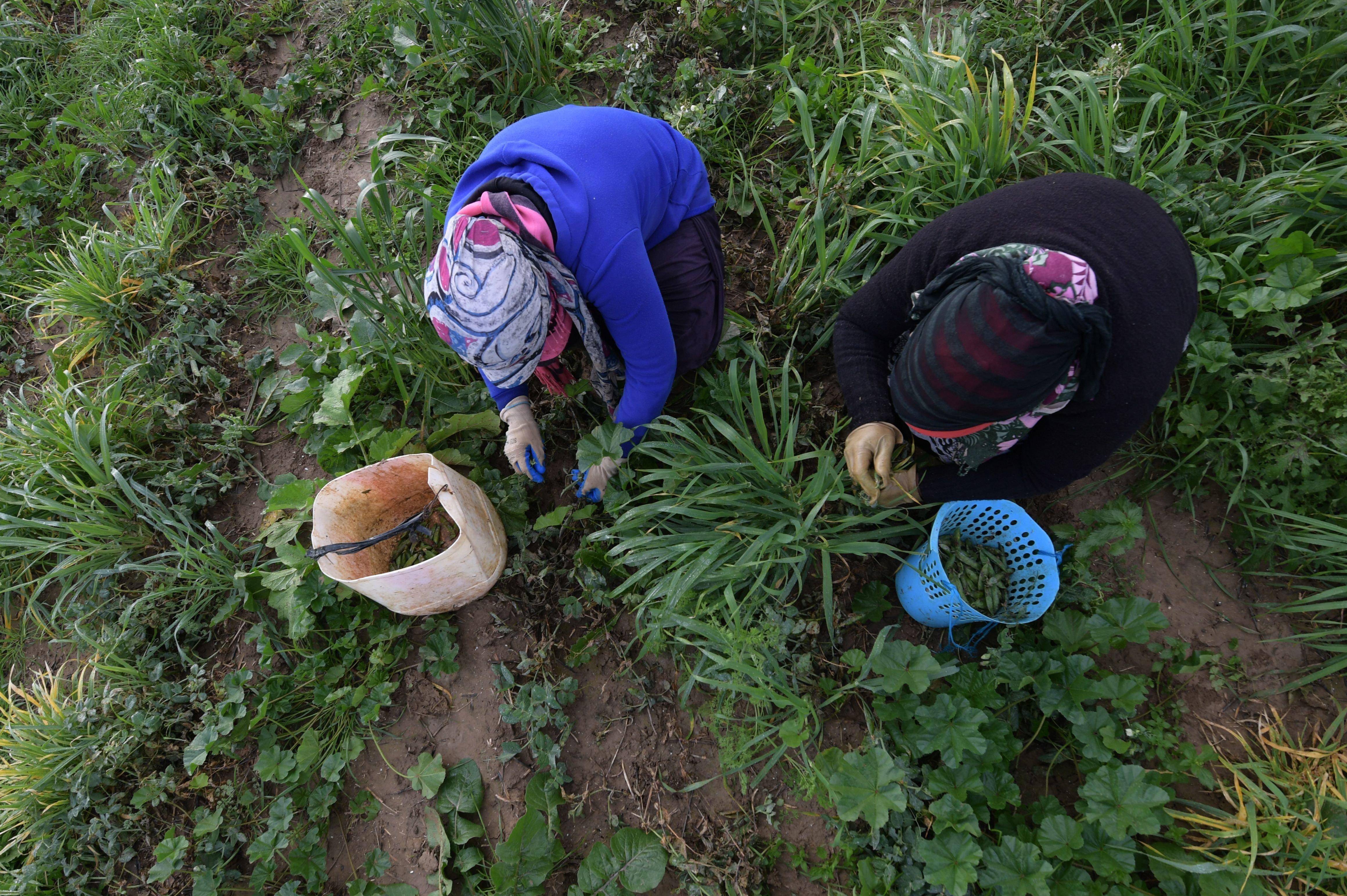 Salah Lamouchi, cet agriculteur tunisien qui appelle à agir contre le changement