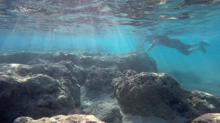 A snorkeler swims around dead corals in Oahu. Hawaii became the first state to ban the sale of sunscreen with oxybenzone and