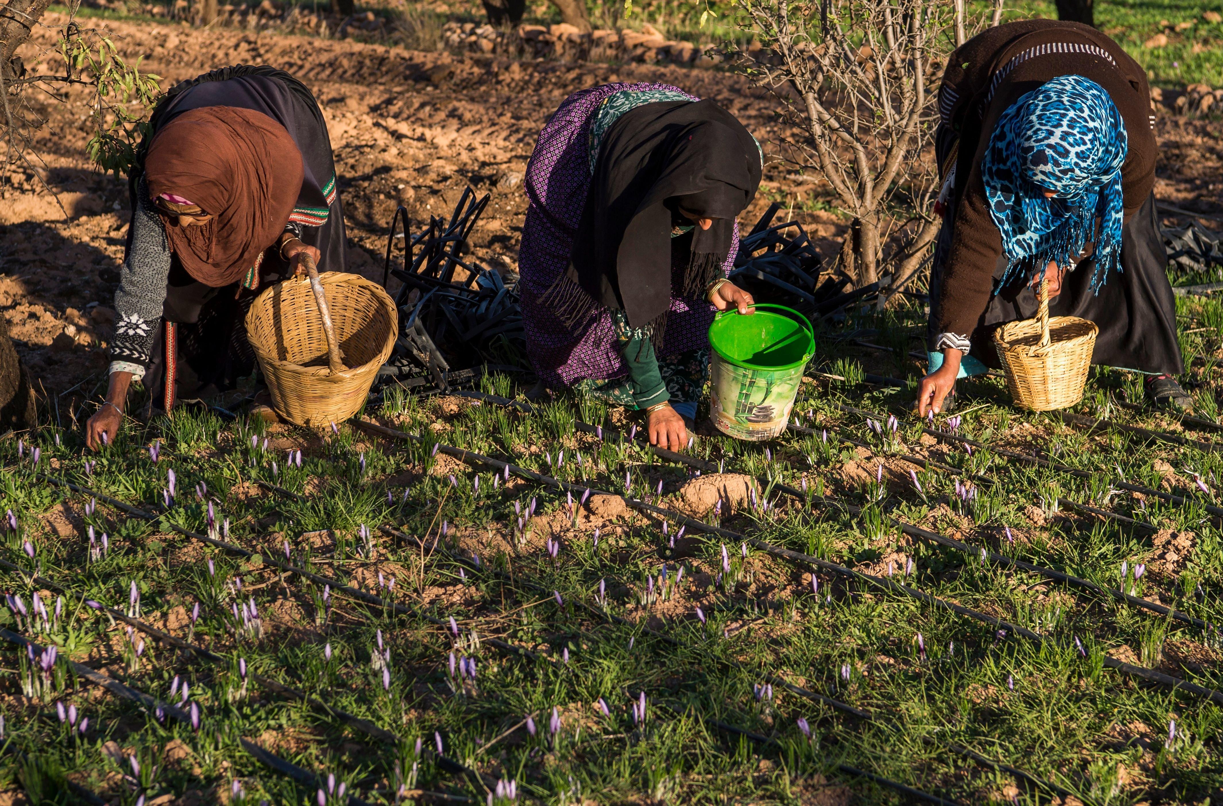 Dans le milieu rural, 60% des Marocaines sont