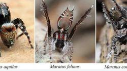 Τρομακτικές και σπάνιες αράχνες ανακαλύφθηκαν στην