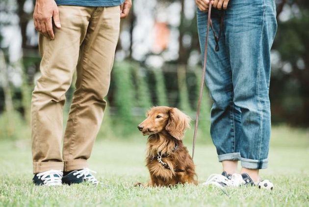 散歩帰りの犬に注意、背中やお腹にたくさん花粉がついているかも...。予防方法は?