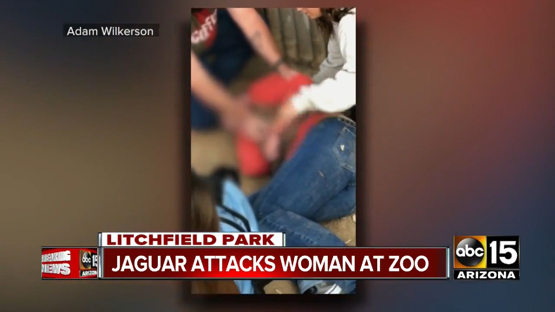Graphic video taken by another park guest captured the woman screaming in pain after sustaining a deep wound to her arm