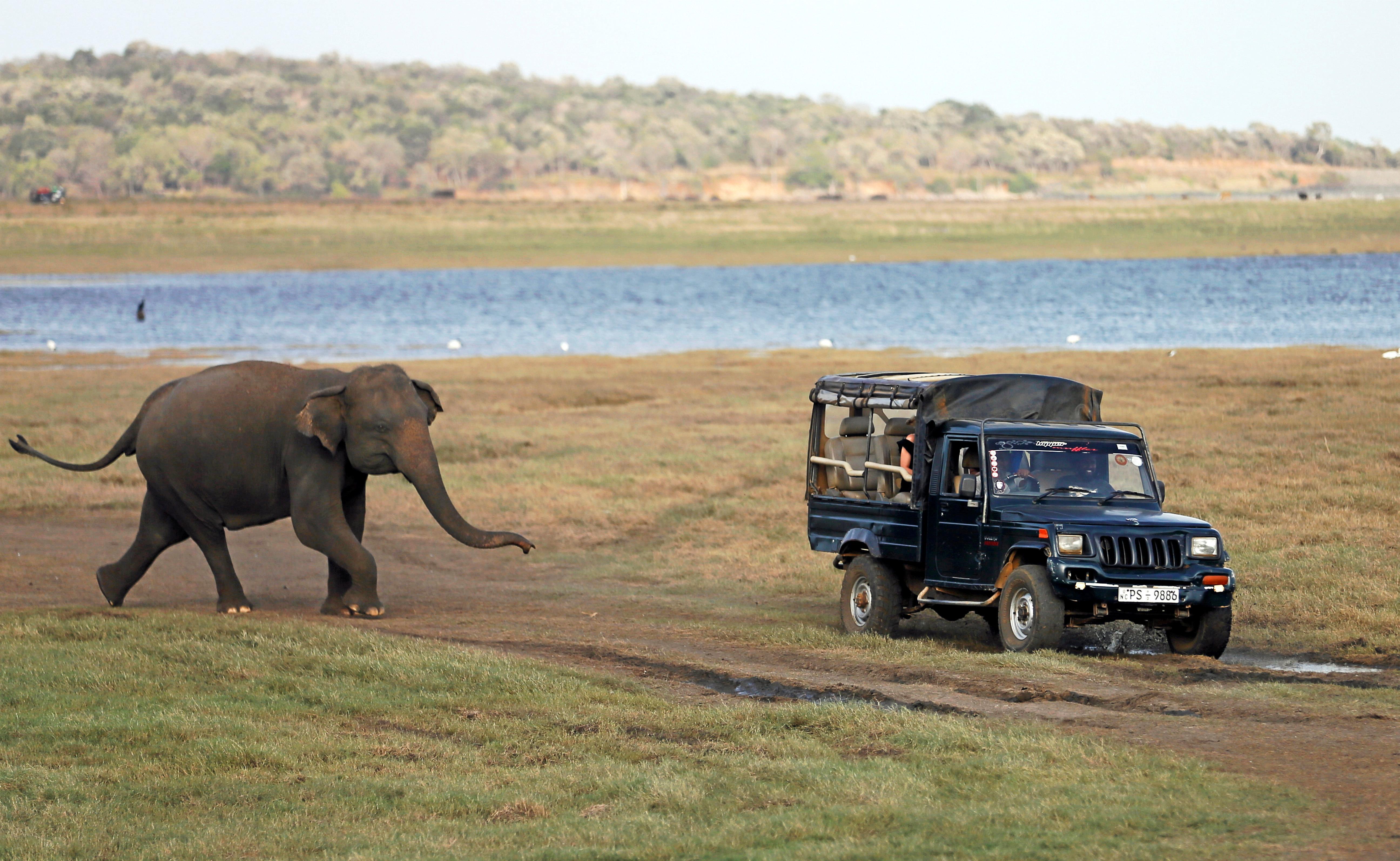 Ινδία: Τρομοκρατημένοι τουρίστες τρέχουν να σωθούν από άγριο
