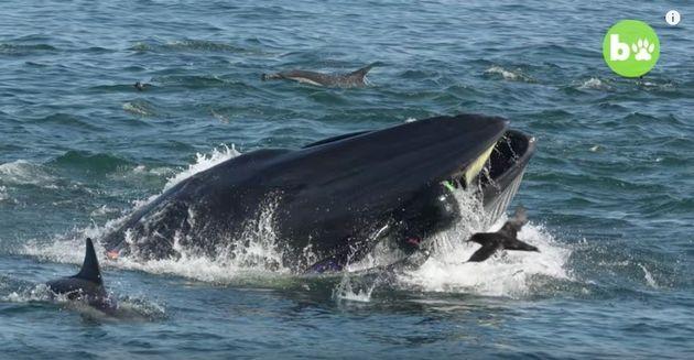シェイフさんがクジラに呑み込まれる瞬間