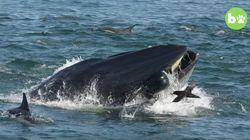 クジラに呑み込まれた男性、口の中から逃げ出して助かる