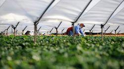 France: Des travailleurs agricoles marocains dénoncent leurs conditions de