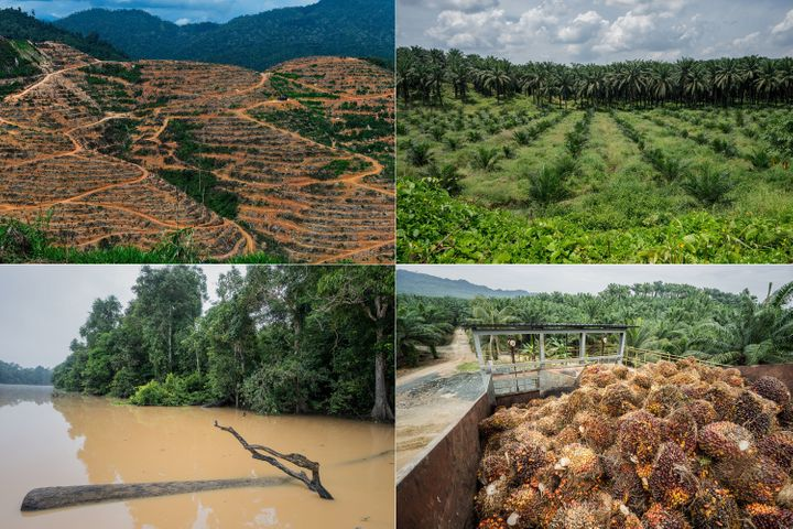 Left top: A durian plantation in Raub, on the outskirts of Kuala Lumpur. Soaring demand for durians in China is being blamed for a new wave of deforestation in Malaysia.&nbsp;<br /> Right top: A palm oil plantation encroaches on a wildlife reserve in Sabah, Malaysia. <br /> Left bottom: The Kinabatangan River flows through a wildlife reserve in Sabah, Malaysia. The overuse of pesticides during the heavy equatorial rains creates a deadly runoff into the fragile river and its tributaries. <br /> Right bottom: A palm oil plantation and factory in Sabah, Malaysia.