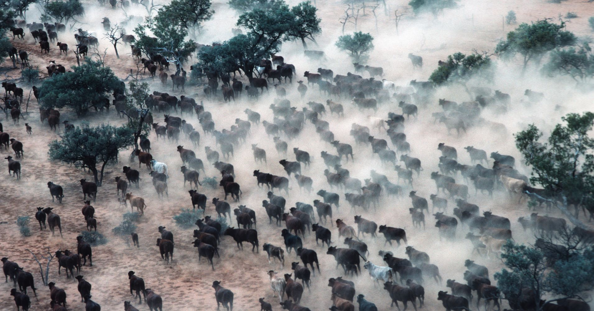 Image result for The Rapid Decline Of The Natural World Is A Crisis Even Bigger Than Climate Change