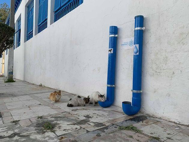 Des jeunes âgés de 12 à 18 ans installent à la Marsa des tubes pour nourrir et abreuver les chats et...