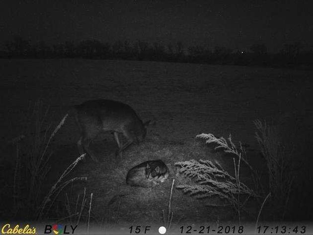 가출한 허스키가 숲에 사는 사슴과 친구가