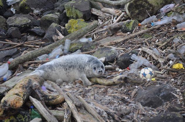 플라스틱 쓰레기로 뒤덮인 해변에서 카메라를 보고 있는