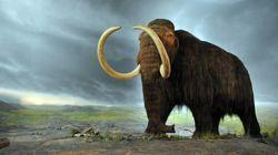 Αναγέννησαν κύτταρα μαμούθ που ζούσε πριν 28.000