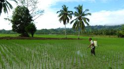 O guia prático para você entender a liberação de agroquímicos no