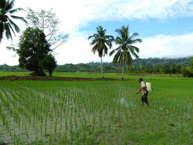 Aplicação de agroquímicos em campo de arroz