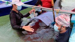 Muere una ballena en Tailandia tras tragarse 80 bolsas de