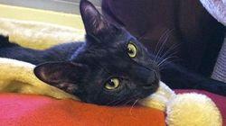 Seis meses de cárcel al militar que mató de un disparo a Negrito, el gato de un