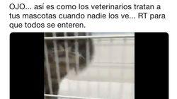 El vídeo viral que muestra cómo tratan los veterinarios a nuestras