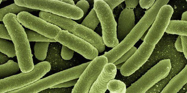 Bacterias.