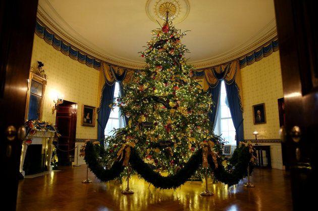 El árbol oficial, ubicado en la Sala