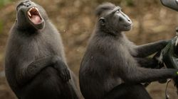 Las fotos más graciosas de animales de