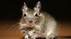 Los ratones se comen más de 15.000 euros de un cajero en