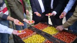 La bandera española de tomates de Pablo