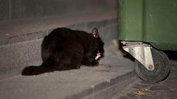 Denuncian que varias personas hicieron explotar un petardo en la boca de un gato en
