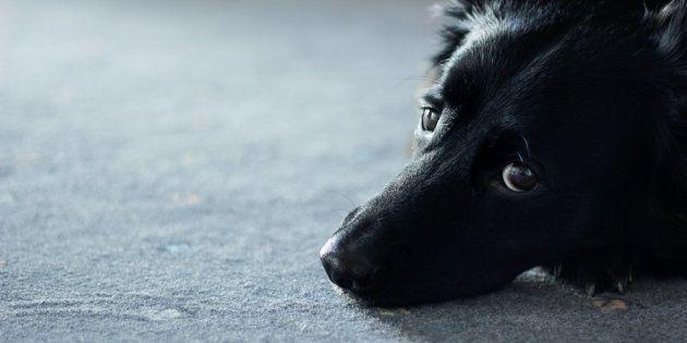La historia de un perro abandonado en Cartagena que encoge el corazón a