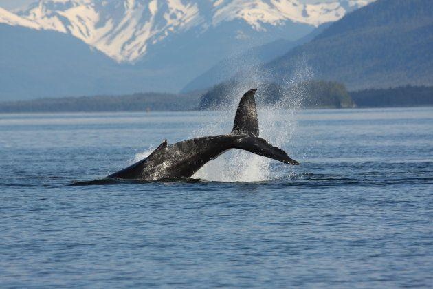 Avistamiento de ballenas en