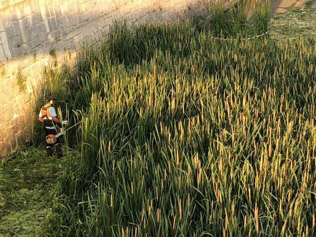 Un operario corta la vegetación en el Manzanares a su paso por Madrid