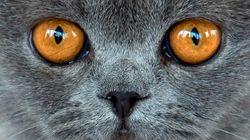 Las redes empiezan a llenarse de gatos para no dar detalles sobre la búsqueda del tirador de
