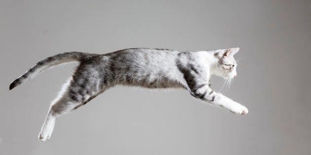 Un hombre de Zaragoza, detenido por intentar hacer volar a su gato tirándolo por la