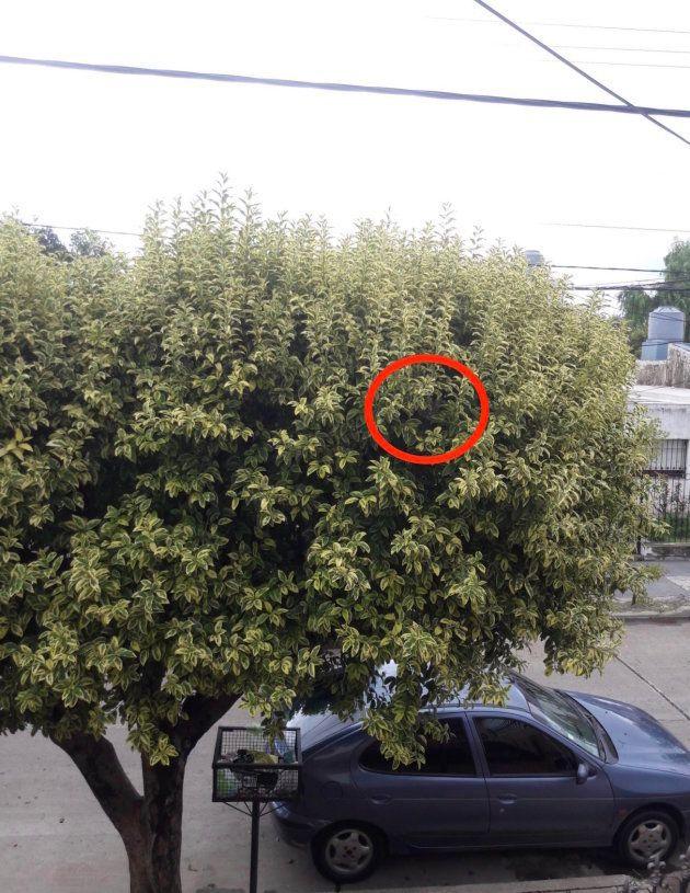 ¿Dónde está el gato? El viral que está volviendo loco a