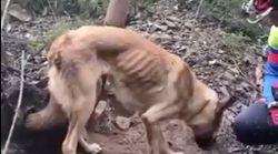 Encuentran a un perro atado en un árbol para que muera de hambre y
