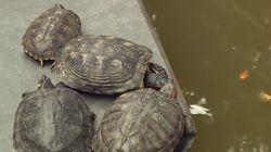 Adiós a las tortugas de la estación de