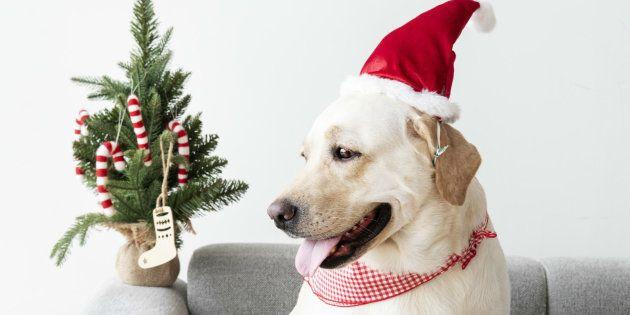 Antes de regalar un perro pregúntale a la persona si quiere/puede tener un estilo de vida que se lo