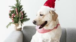 NO, los perros no son un buen regalo de